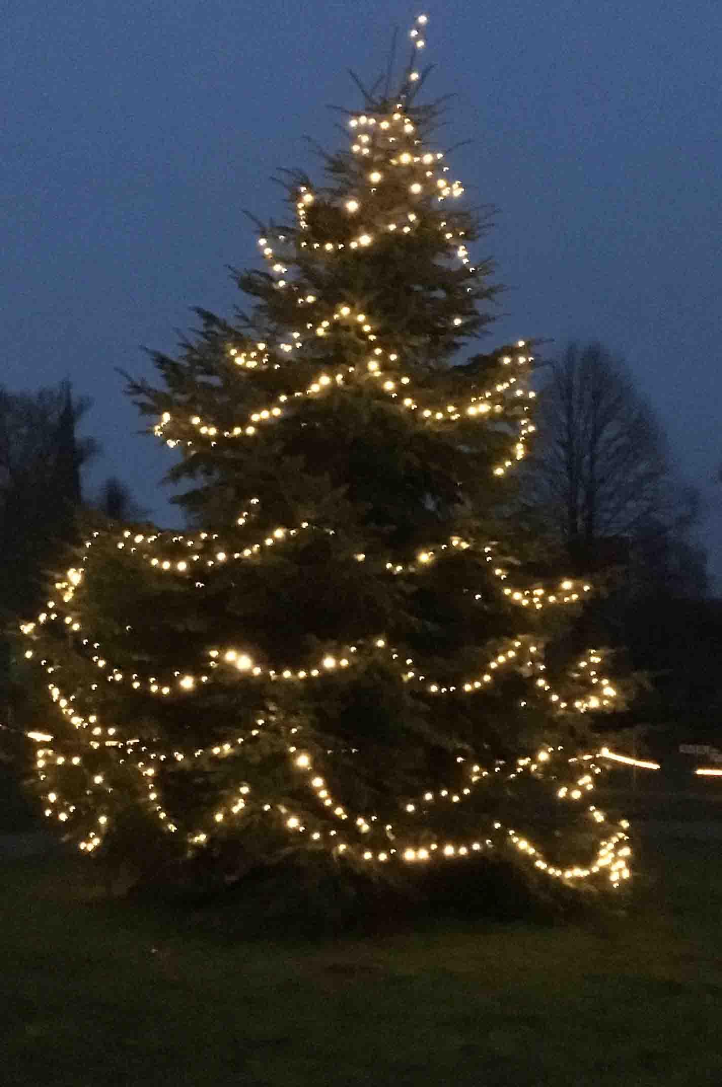 Pronstorfer Weihnacht Weihnachtsbaum