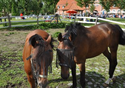 Schleswig-Holstein Musik Festival Pronstorf Pferde